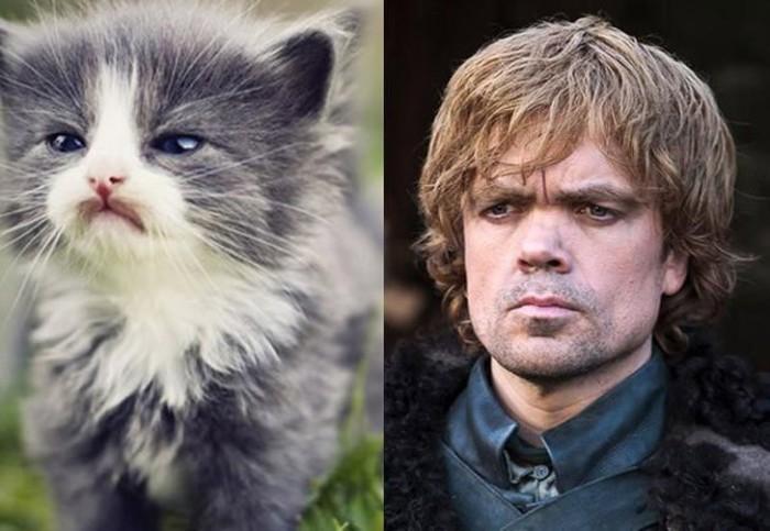 Внешность обманчива, с виду маленький наивный котенок, а на деле мудрый стратег - Тирион Ланнистер.