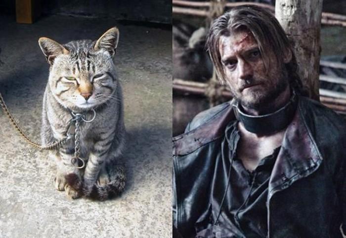 Смиренность этого кота - иллюзия, ведь в глубине души он Джейме Ланнистер который никогда не сдается.