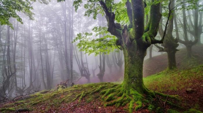 В этом лесу так много тайн.