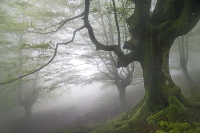 Сумеречный лес.