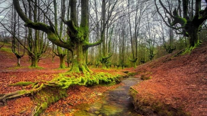 Таинственный лес: парк Горбеа в Испании.