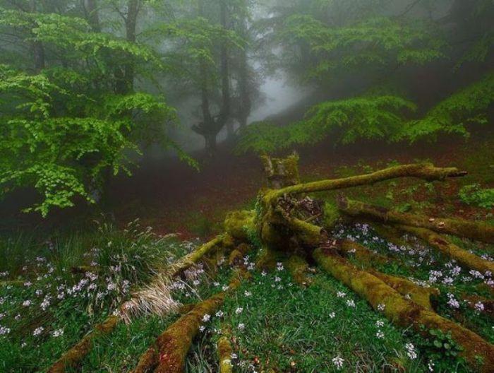 Зеленая долина, обитель эльфов.