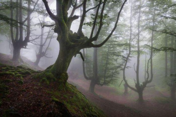 Лесная обитель тумана.