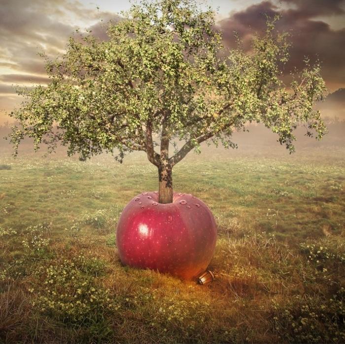 Яблочное дерево. Автор: Even Liu.