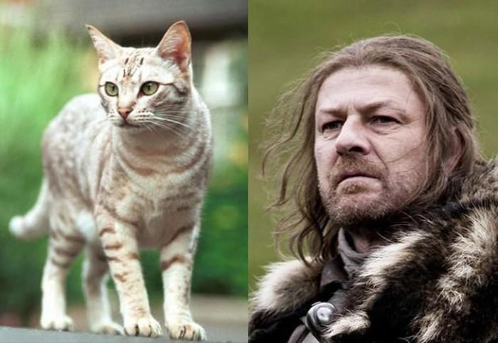 Уличный кот нашел свой образ в Неде Старк готового защищать свою семью.