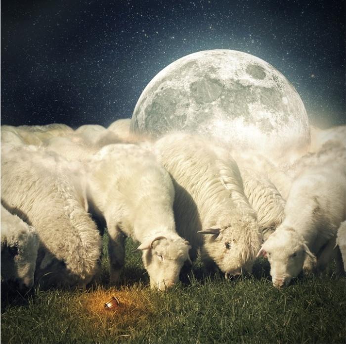 Лунные овцы. Автор: Even Liu.