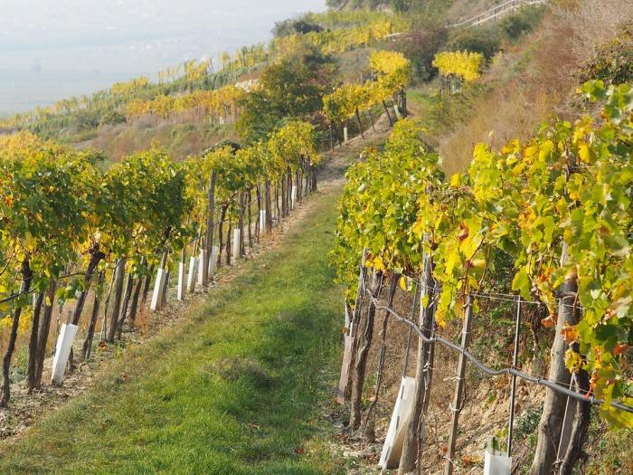 Виноградная плантация семейства Кардашьян. \ Фото: factinate.com.