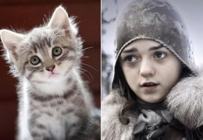 Очаровательный котенок, с огромными наивными глазами, словно маленькая дерзкая Арья.