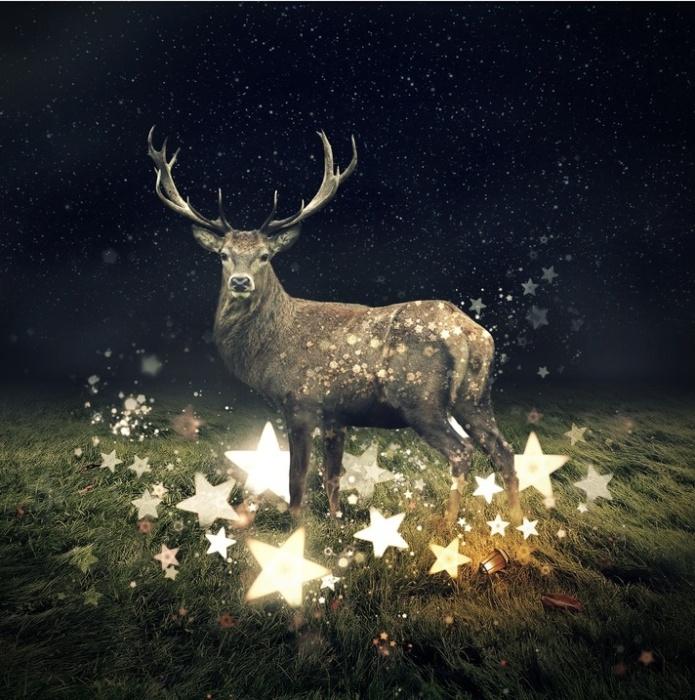 Собиратель звёзд. Автор: Even Liu.