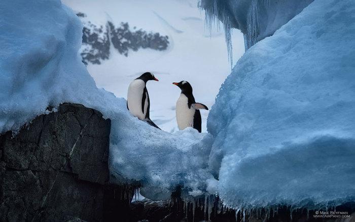 Антарктида - родина пингвинов. Автор фото: группа российских фотографов AirPano.