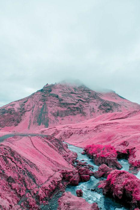 Все оттенки розового. Автор: Al Mefer.