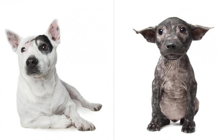 Фотограф Алекс Сирнс делает портреты собак, которые прекрасны в своём несовершенстве.