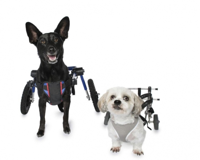 Рубен и Кейша в инвалидных колясках. Автор: Alex Cearns.