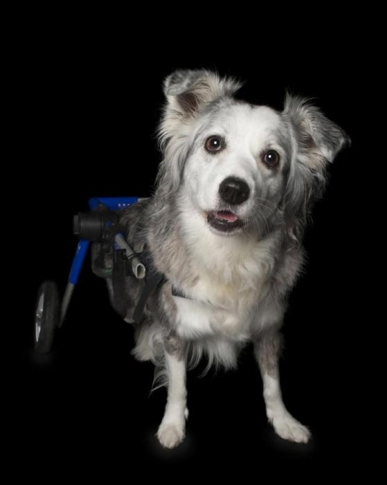 Джесси, которая любит свою коляску. Автор: Alex Cearns.