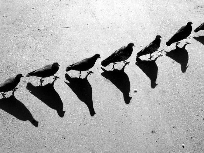 Игры с тенью. Сюрреалистические работы российского фотографа Алексея Меньшикова (Alexey Menschikov).