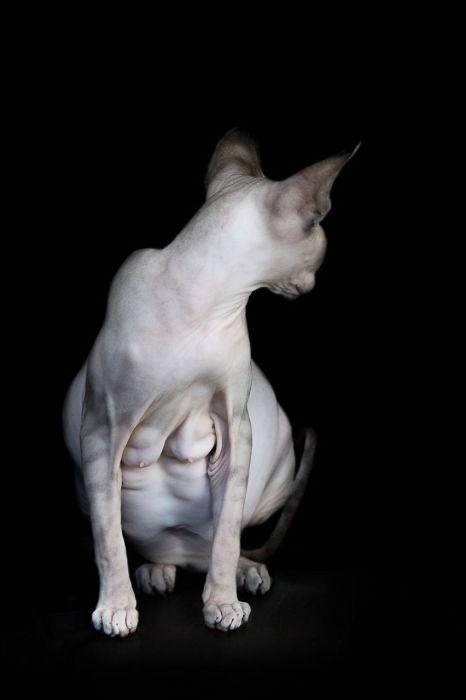 Сфинкс. Фото Alicia Rius.