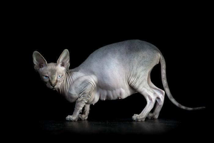 Сердитая кошка. Фото Alicia Rius.