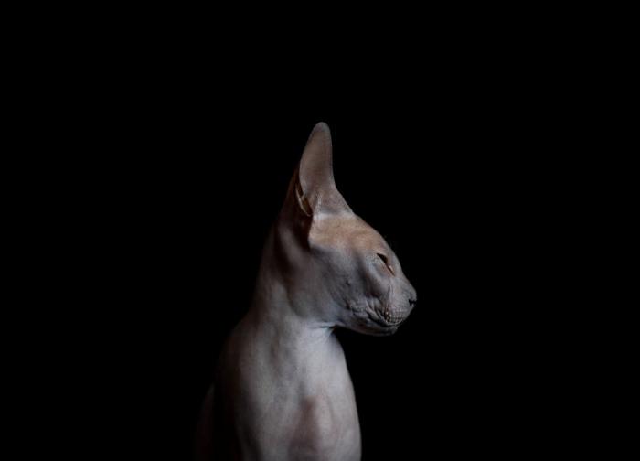 Мистическое существо - сфинкс. Фото Alicia Rius.