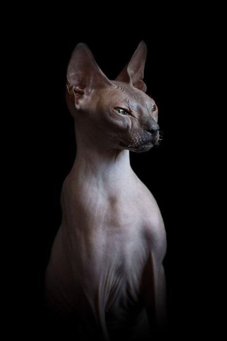 Статуэтка из плоти и крови. Фото Alicia Rius.