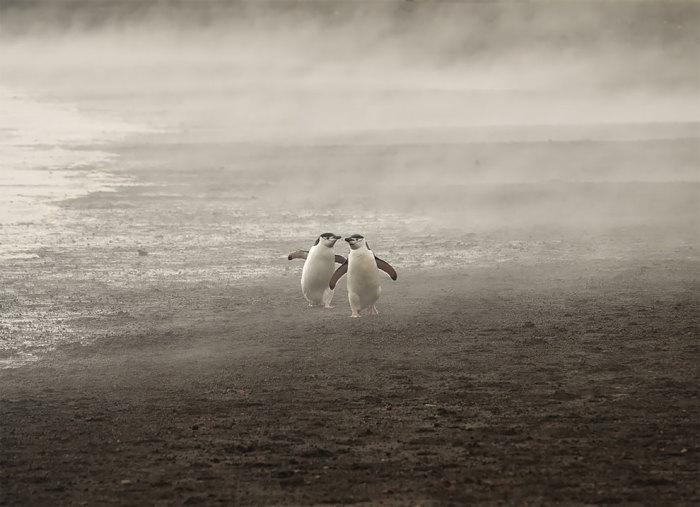 Прогулка в тумане. Автор: Roslyn Chant.