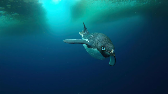 Пловец. Автор: Frederique Oliver.