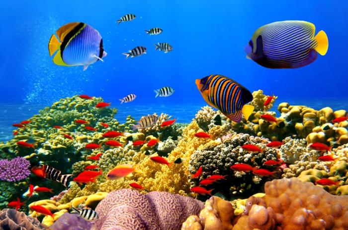 Красота Большого Барьерного риф под водой.