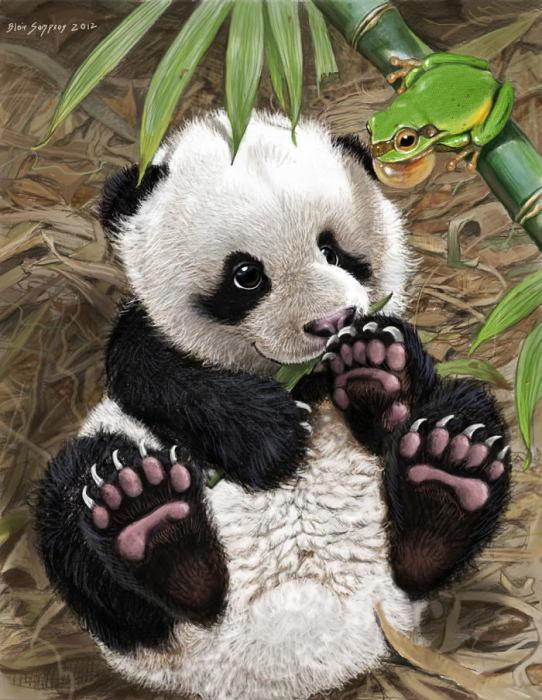 Панда. Автор: Blair Sampson.