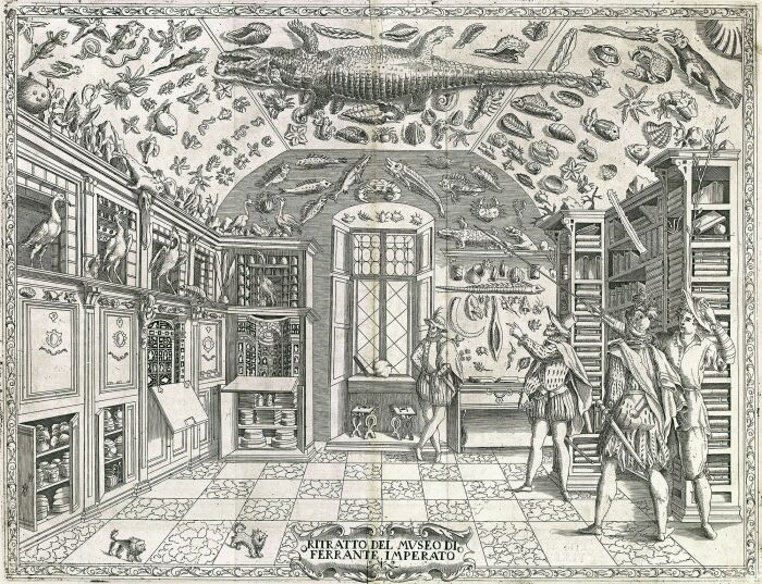 Гравюра DellHistoria Naturale, Ферранте Императо, 1599 год. \ Фото: helmuth-oehler.at.