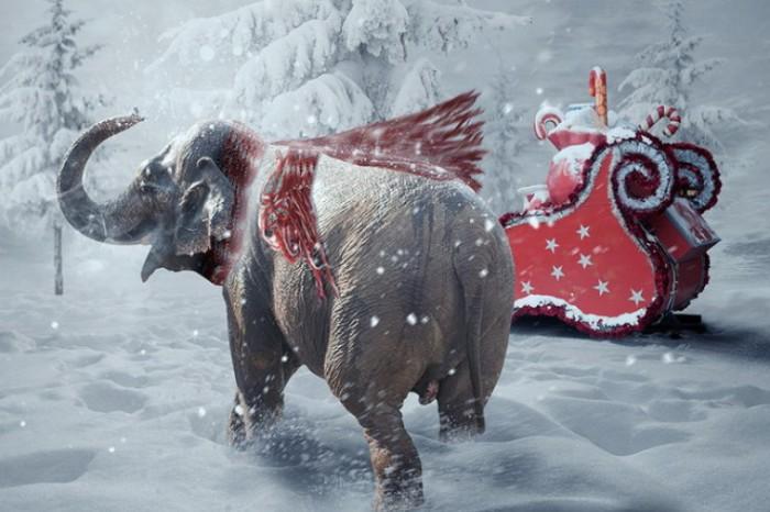 Зимняя сказка. Фотохудожник Караш Йонуц (Caras Ionut).