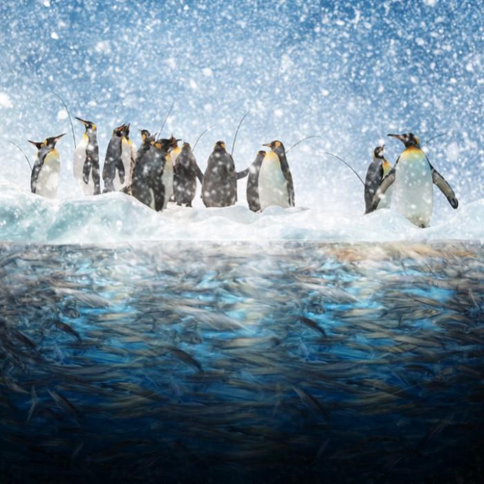Остров пингвинов. Фотохудожник  Караш Йонуц (Caras Ionut).