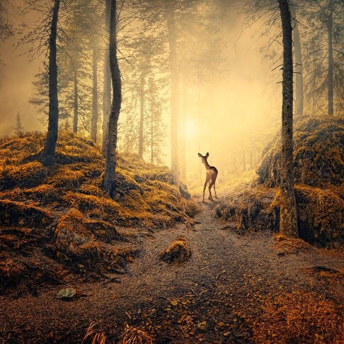 Дивный лес. Фотохудожник  Караш Йонуц (Caras Ionut).