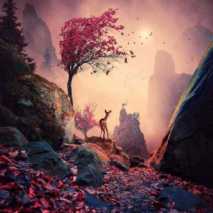 Сказочный лес. Фотохудожник  Караш Йонуц (Caras Ionut).