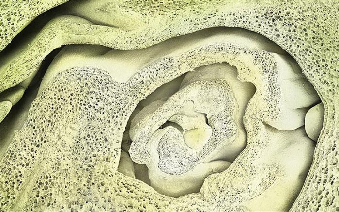 Брюссельская капуста, словно пещерный лабиринт.