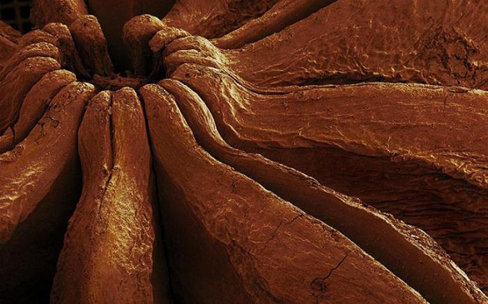 Анис, который так похож на вулканический кратер.