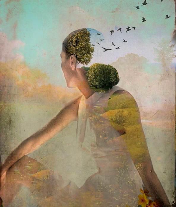 Птицы в небе. Автор: Catrin Welz-Stein.