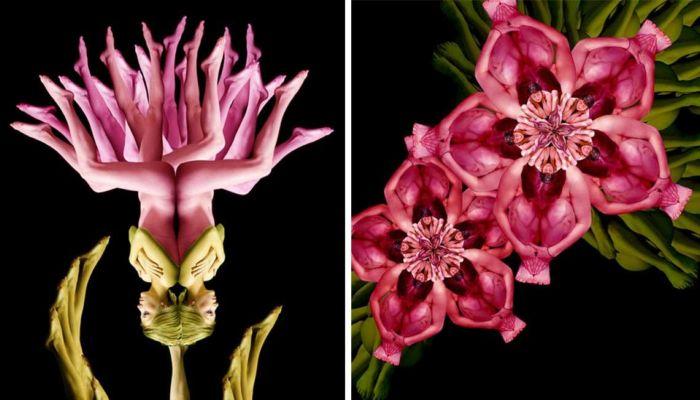 Прекрасные цветы, созданные из человеческих тел. Автор: Cecelia Weber.