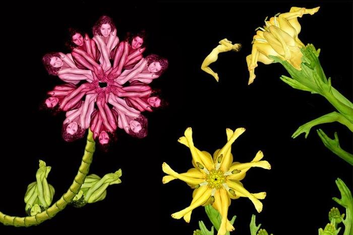 Разноцветные цветы. Автор: Cecelia Weber.