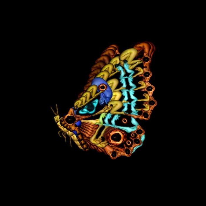 Пёстрая бабочка. Автор: Cecelia Weber.