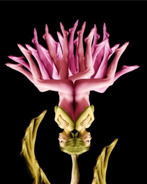 Райский цветок. Автор: Cecelia Weber.