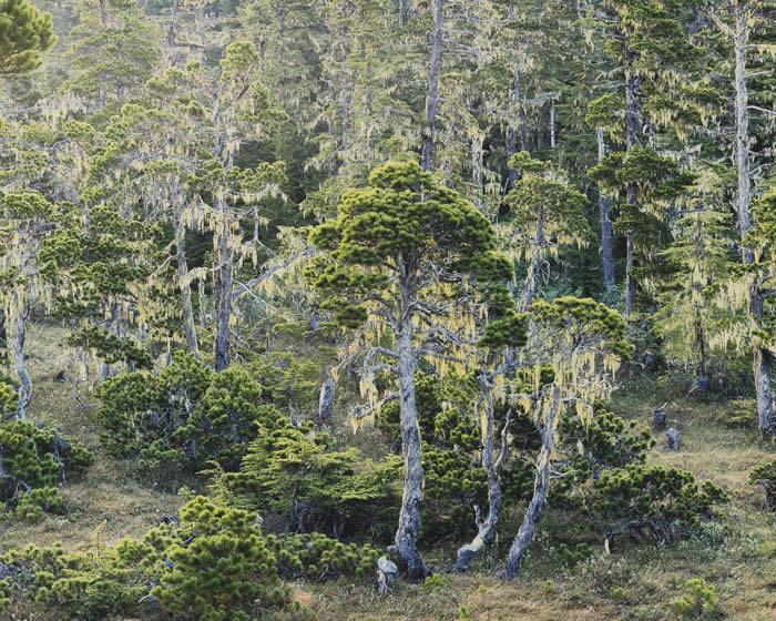 Лес, Аляска, 1993 год. Автор: Christopher Burkett.