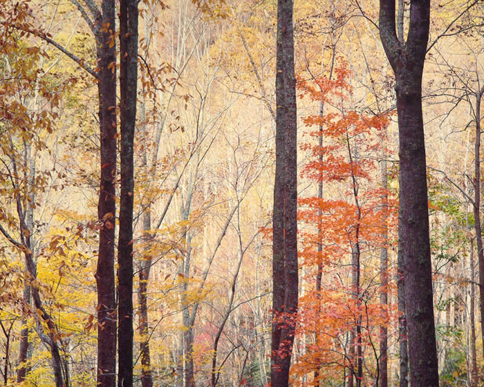 Аппалачи лес, восход, Вирджиния, 1991 год. Автор: Christopher Burkett.