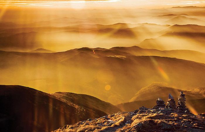 В золотистых лучах солнца. Автор: Cornel Pufan.