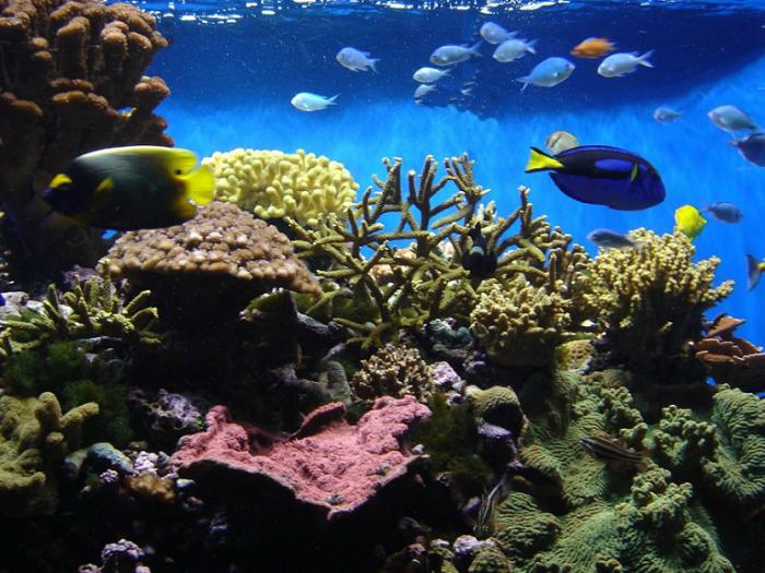 Подводный мир куба