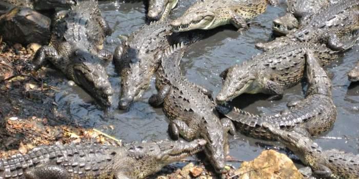 Крокодилы против пехоты. \ Фото: war.org.ua.