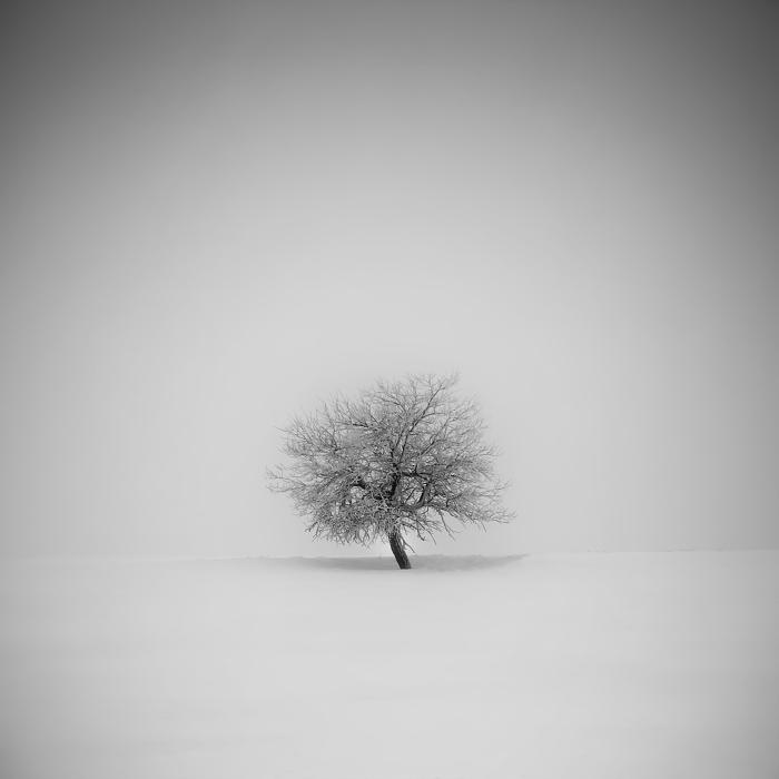 Дерево, Рудные горы, Чехия. Автор: Daniel Rericha.