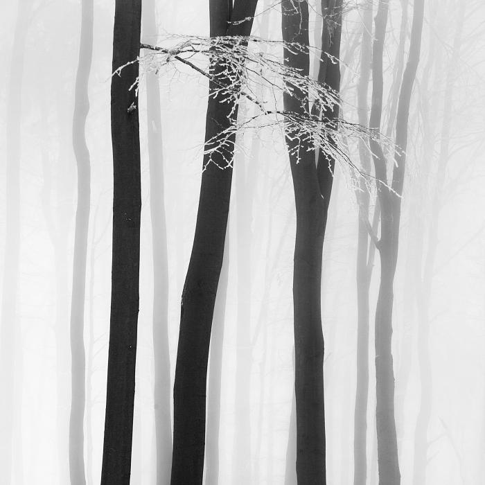 Стволы. Автор: Daniel Rericha.