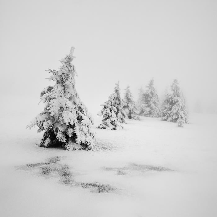 Зимняя сказка. Автор: Daniel Rericha.