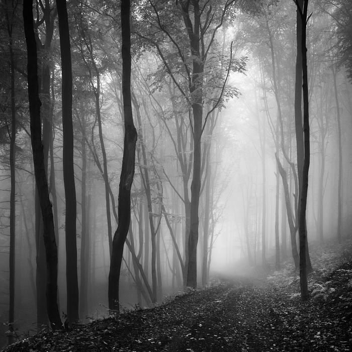 Лес, Чехия. Автор: Daniel Rericha.
