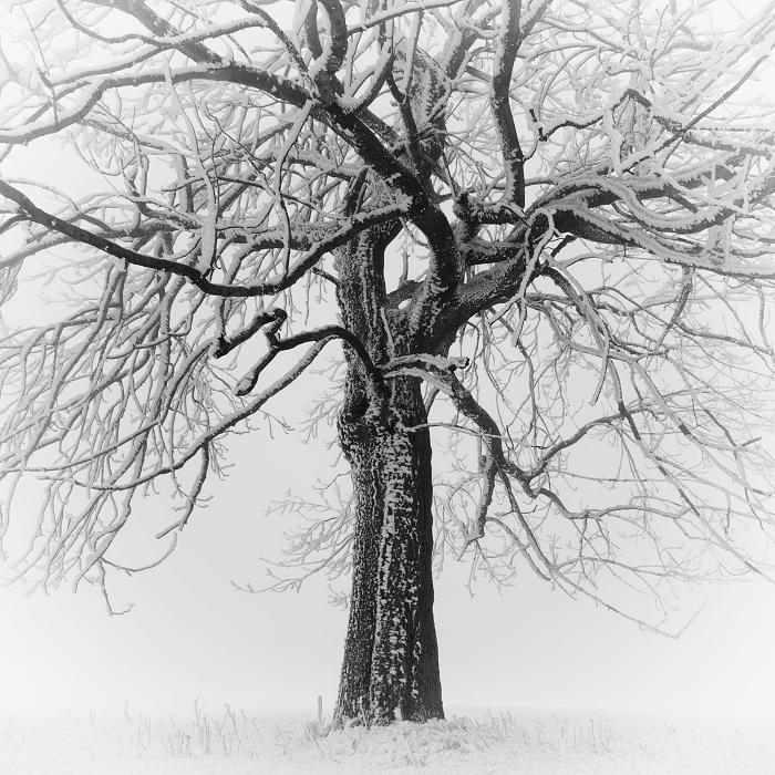 Зима, Рудные горы, Чехия. Автор: Daniel Rericha.