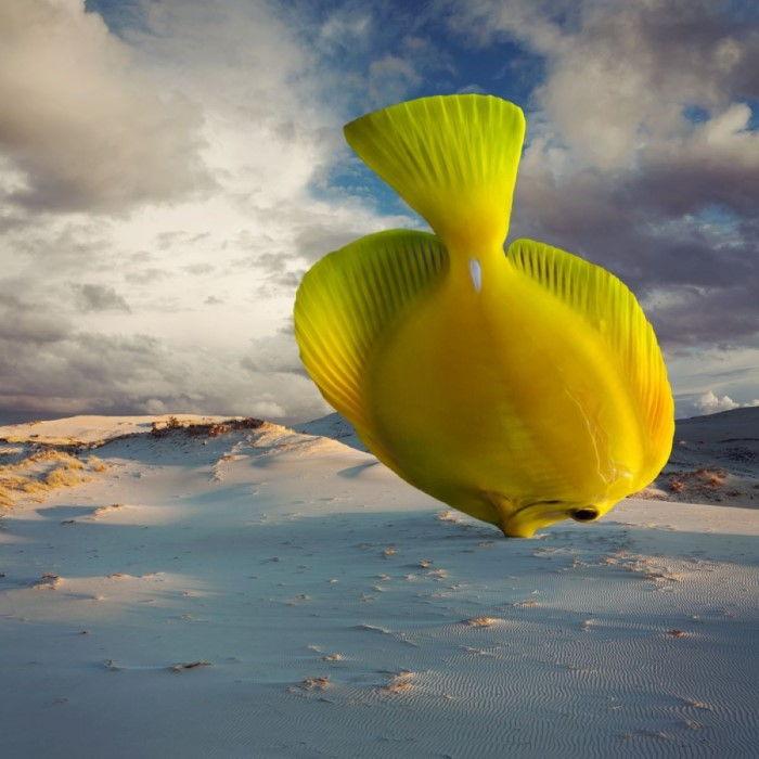 Песчаная рыба. Автор: Dariusz Klimczak.